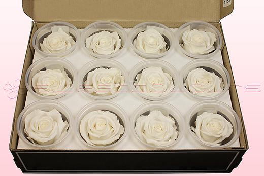 12 Rosas Sin Tallo Preservadas, Blanco, Tamaño M