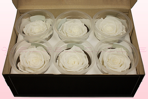 6 Preserved Rose Heads, White, Size L