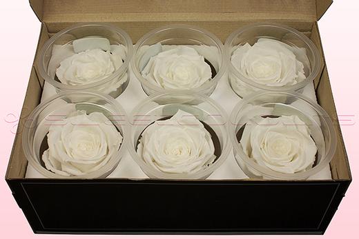 6 Rosas Sin Tallo Preservadas, Blanco, Tamaño L