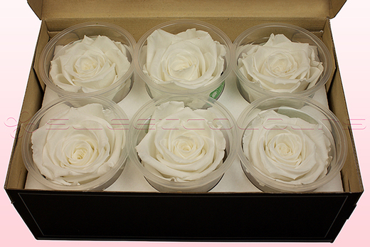 6 Preserved Rose Heads, White, Size XL