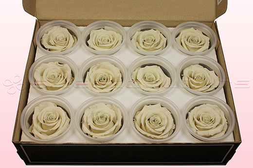 12 Preserved Rose Heads, Off White, Size M
