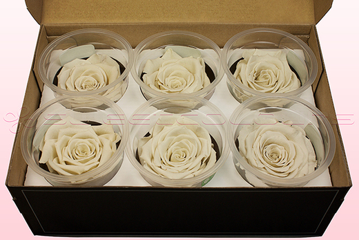 6 Preserved Rose Heads, Off White, Size L