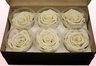 6 Preserved Rose Heads, Off White, Size XL