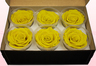 6 Preserved Rose Heads, Yellow, Size XL