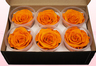 6 Preserved Rose Heads, Dark Yellow, Size XL