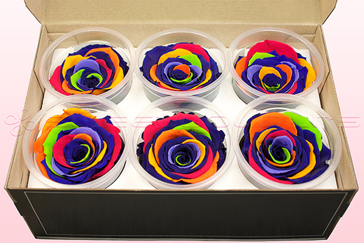 6 Preserved Rose Heads, Rainbow, Size XL