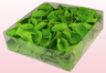 2 litre box with light green preserved rose petals