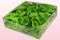 Envase de 2 litros con pétalos de rosa preservados de color verde claro