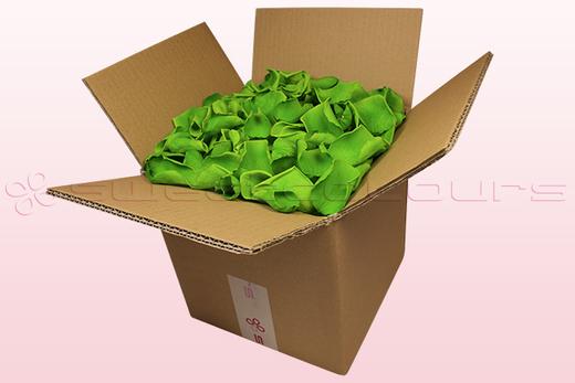 Caja de 8 litros con pétalos de rosa preservados de color verde claro