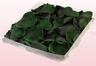 Envase de 1 litro con pétalos de rosa preservados de color verde oscuro