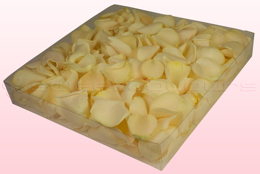 1 Litre Box With Cream Freeze Dried Rose Petals