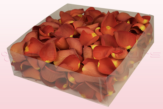 2 litre box with copper coloured freeze dried rose petals