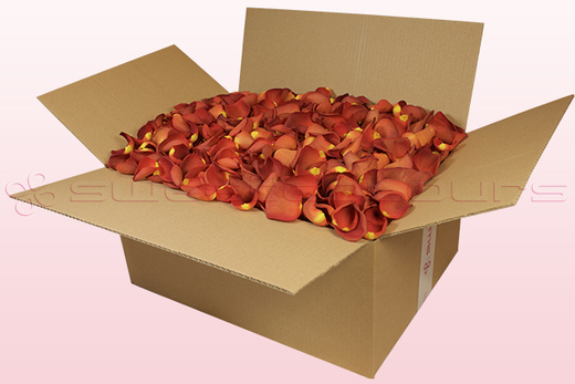 24 litre box with copper coloured freeze dried rose petals