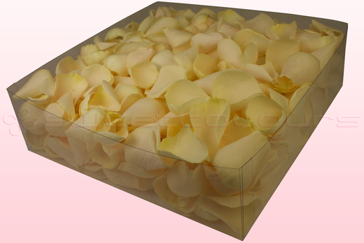 2 litre Box With Cream Freeze Dried Rose Petals