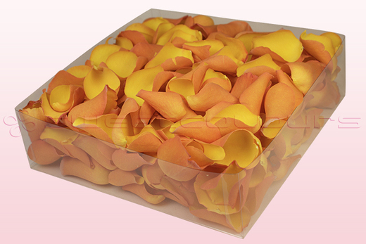 Confezione da 2 litri con petali di rosa liofilizzati di colore giallo oro