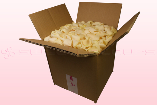 8 Litre Box With Cream Freeze Dried Rose Petals