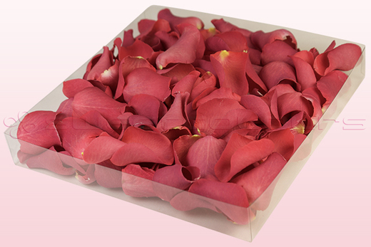 1 litre box with coral coloured freeze dried rose petals