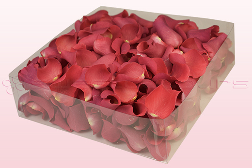 2 litre box with coral coloured freeze dried rose petals