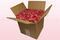 Caja de 8 litros con pétalos de rosa liofilizados de color coral