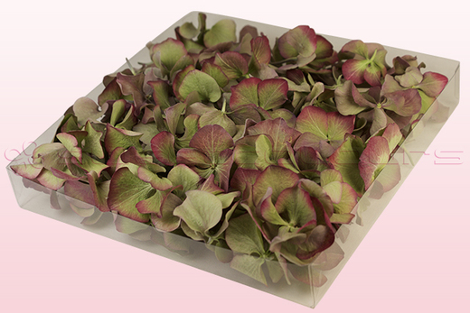 1 litre box with vintage green freeze dried hydrangea petals