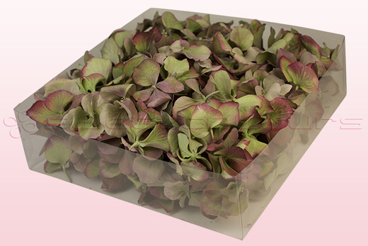 2 litre box with vintage green freeze dried hydrangea petals