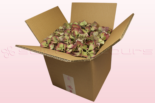 8 litre box with vintage green freeze dried hydrangea petals