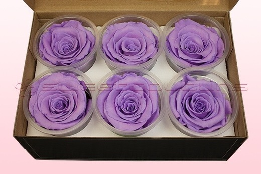 6 Geconserveerde Rozenkoppen Lavendel pastel, Maat L