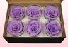 6 Rose Stabilizzate, Lavanda pastello, Taglia L