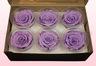 6 Rose Stabilizzate, Lavanda pastello, Taglia XL