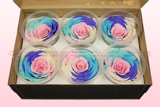 6 Preserved Rose Heads, Rainbow pastel, Size XL