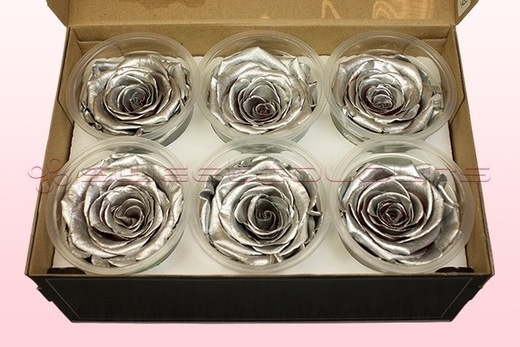 6 Preserved Rose Heads, Metallic Silver, Size XL