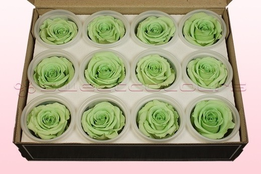 12 Preserved Rose Heads, Mint Green, Size M