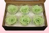 6 Preserved Rose Heads, Mint Green, Size L