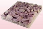 Final check 1 litre box freeze dried rose petals lovely lilac