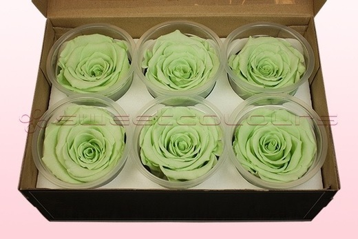6 Preserved Rose Heads, Mint Green, Size XL