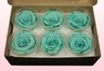 6 Preserved Rose Heads, Turquoise, Size L