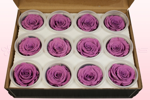 12 Preserved Rose Heads, Lavender, Size M