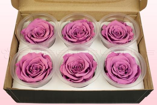 6 konservierte Rosenköpfe, Lavendel, Größe L