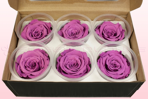 6 Preserved Rose Heads, Lavender, Size XL
