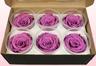 6 Geconserveerde Rozenkoppen, Lavendel, Maat XL