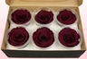 6 Preserved Rose Heads, Wine, Size L