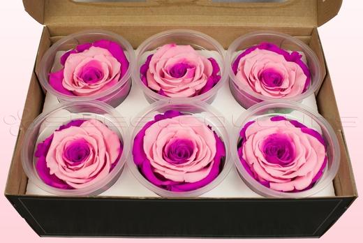 6 Rose Stabilizzate, Rosa & rosa scuro, Taglia XL