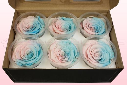 6 konservierte Rosenköpfe, Rosa & Blau pastell, Größe XL