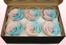 6 Preserved Rose Heads, Pink & blue pastel, Size XL