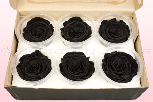 6 Preserved Rose Heads, Black, Size L