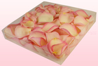 Final check freeze dried rose petals  1 litre box  vintage pink  sweet colours