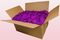 24 litre box with Violet pink coloured preserved rose petals