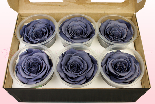 6 Preserved Rose Heads, Grey, Size XL