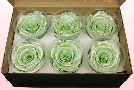 6 konservierte Rosenköpfe, Satin mintgrün, Größe XL