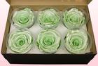 Final check rose amor  preserved roses  size xl  satin mintgreen